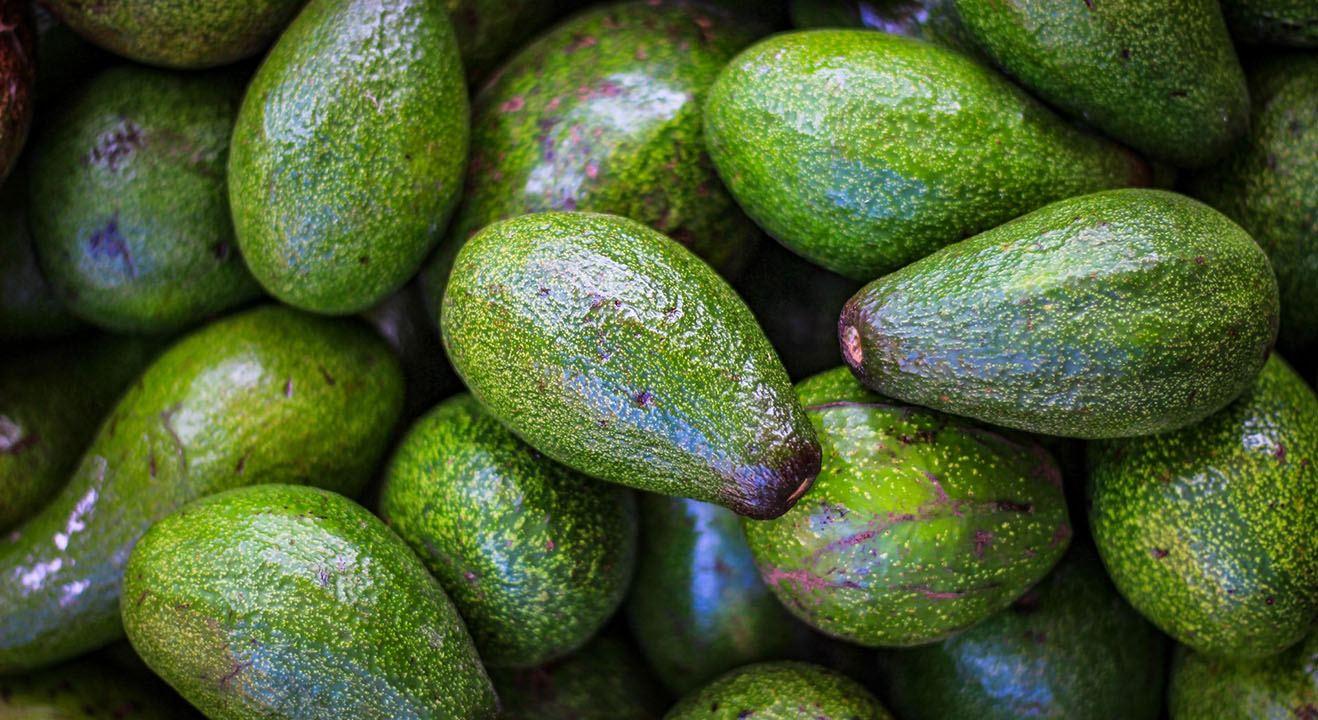 avocadoja